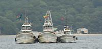 瀬戸内海の夏の漁・・シラス・・
