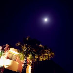 満月とウマ娘
