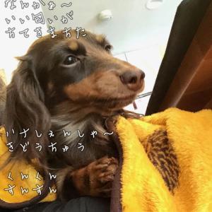 愛犬の嗅覚♬♪テトの鼻センサーがスゴイ!