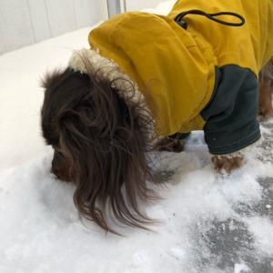 愛犬・バルコニーで寒さやせ我慢の雪遊び♬可愛い足型