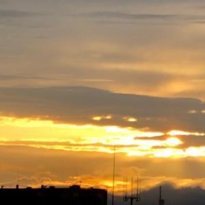おはよう~朝日☀&しいたけ成長紀2✨