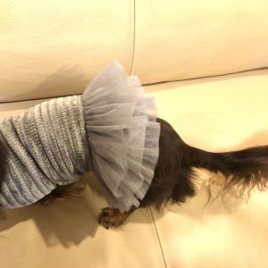 ネットで購入した犬服をちくちく手縫いでリメイク♬♪.。o○