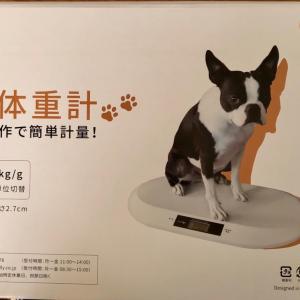 愛犬…届いたスケールとダイエットの成果♬