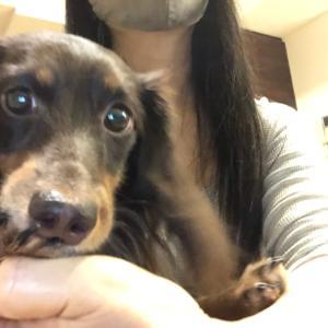 愛犬…テトのお顔がっ