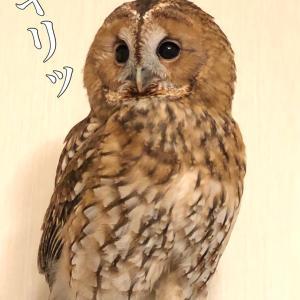 ぼく、イケメーン!!!( ❝̆ ̫̮ ❝̆ )✧