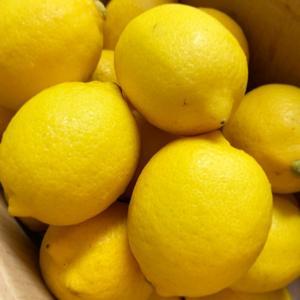 国産レモン届きました♡