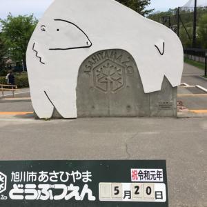 旭山動物園混雑する駐車場を避けて無料で停められる穴場をご紹介