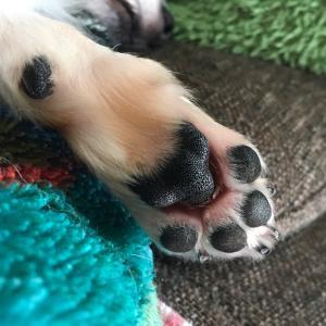足の爪と靴下の穴