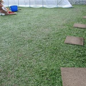 まだまだ十分に楽しめるクラピアの緑絨毯です