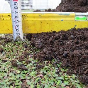 クラピアの土壌環境改善は来年の春までが勝負
