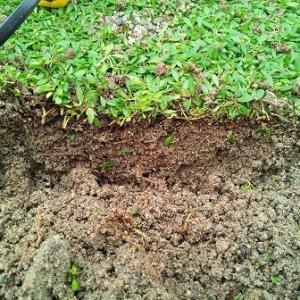 クラピアに適した土壌に変えていくことが必要