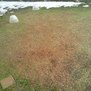 何かがヘン?なのか雪が全くないクラピアの庭