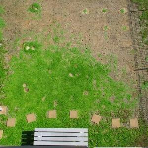 まだまだ認知されない寒い地方のクラピア植栽