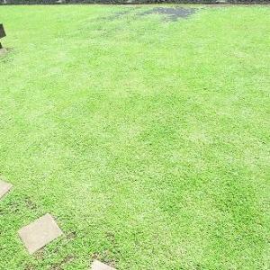 クラピア庭で遊ぶのに最高の季節がやってきた