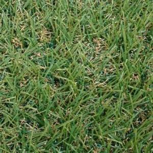 家の猫は人工芝の上を嫌うのでクラピアにした