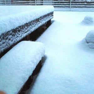 クラピアのお話しは雪がとけるまでお休みです