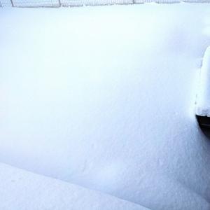 あともう少しでクラピアが見えると思ったら雪