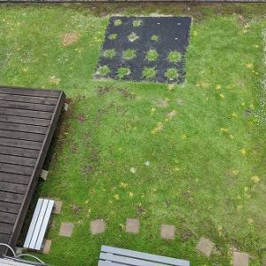 昨年と今年で何かが違うクラピア庭を見てみる