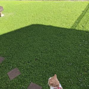 夏は何もせずクラピアの絨毯を満喫して下さい