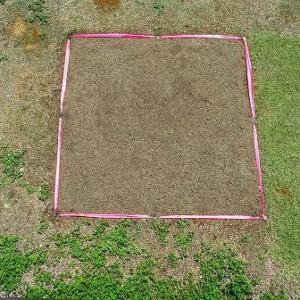 クラピアの庭に植えたダイカンドラの成長記録
