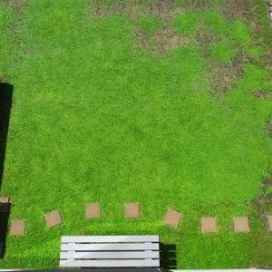 そろそろ梅雨が明けそうですクラピア庭の様子
