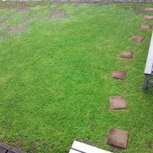 マイペースで広がっていくクラピア庭と急く私