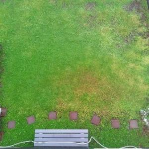 水切れから非常に早い回復を見せるクラピア庭