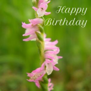 Dear Birthday - 7月4日 -