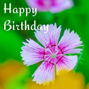 Dear Birthday - 7月14日 -