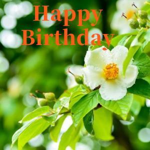 Dear Birthday - 7月15日 -