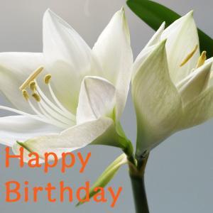 Dear Birthday - 7月16日 -