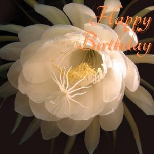 Dear Birthday - 7月19日 -