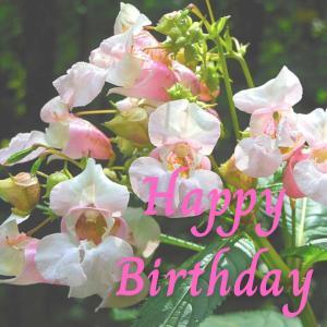 Dear Birthday - 7月25日 -