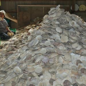 牡蠣の養殖