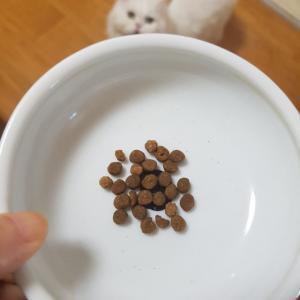 猫にストレスなく錠剤を飲ませる方法