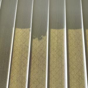 泣きっ面に蜂🐝網戸と窓の間にアシナガバチの巣を作られた