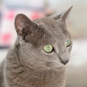 「猫は目が良くない…」は間違え。