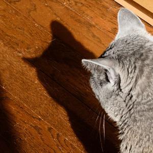 猫は人には見えない何かが見えるとか見えないとかw