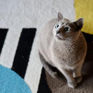 子猫みたいなお顔に撮れましたw