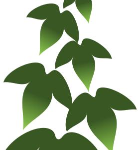 [星:5pt]を使った朝顔の葉の描き方