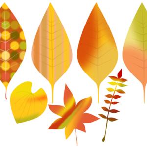 紅葉(こうよう)した葉っぱの描き方
