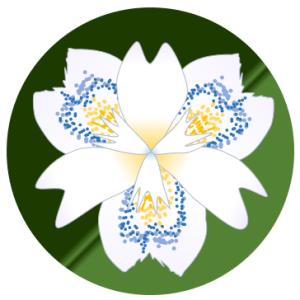 アヤメ科の花シャガを描いてみよう
