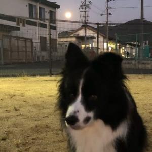 綺麗なお月様と甘えたさんのロッキーさん♪