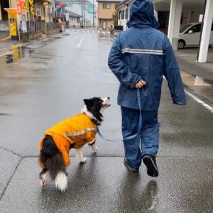 雨にも負けず…♪