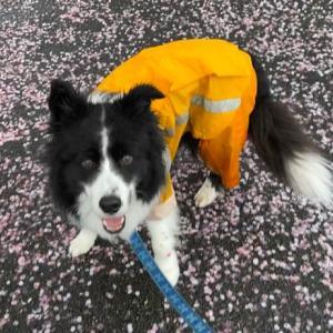 雨の日の散歩も、好っきゃけど……♪