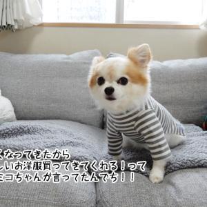 オシャレの道はイバラ道?!