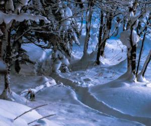 狩猟での防寒対策としてぼくがやっている3つのこと