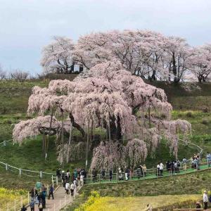三春の滝桜ツーリング