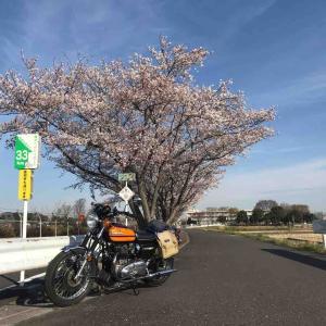 春本番〜富士山を眺めて