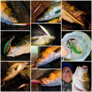 効率よく良型シーバスを釣る方法